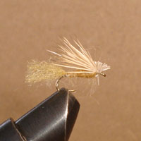 Caddis Sparkle Tan