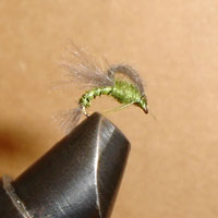 Emerger, Loop Wing Olive