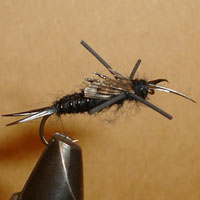 Stonefly Black Rubberleg
