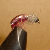 Caddis Larva Deep Purple