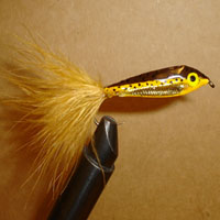 Jansens Brown Trout