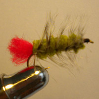 Wooly Worm Olive/Red